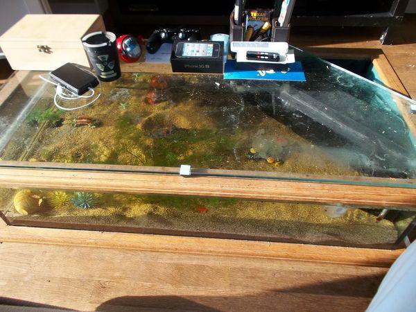 Table basse aquarium eau chaude