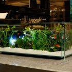 Table basse aquarium aquatlantis avis