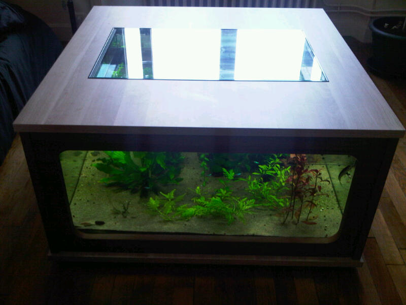 Table basse aquarium en bois