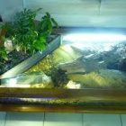 Vends aquarium table basse